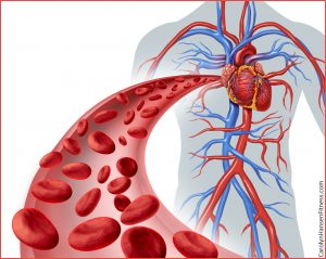 heartXbloodXcirculation