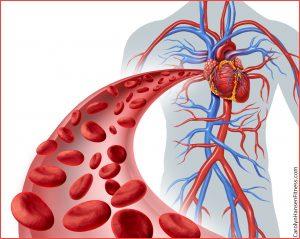 heartXbloodXcirculation